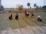 Kandal - Vegetable group